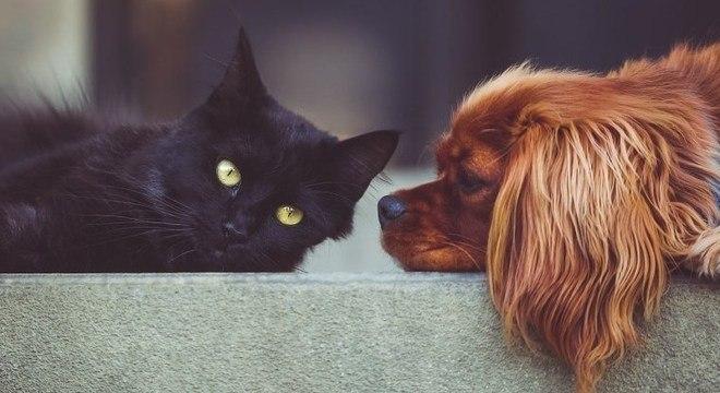 Nova lei nos EUA impede consumo de cães e gatos como alimento