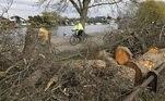 A polícia do condado de Surrey, no Reino Unido, tem uma estranha missão para completar: encontrar um lenhador misterioso que já derrubou cerca de 60 árvores na região