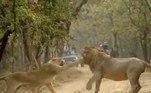 As imagens foram compartilhadas no Twitter pelo perfil Wild India (Índia Selvagem, em tradução livre)