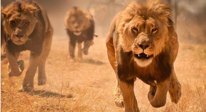 O número de atacantes e o número de defensores têm um impacto nas estratégias do mundo animal