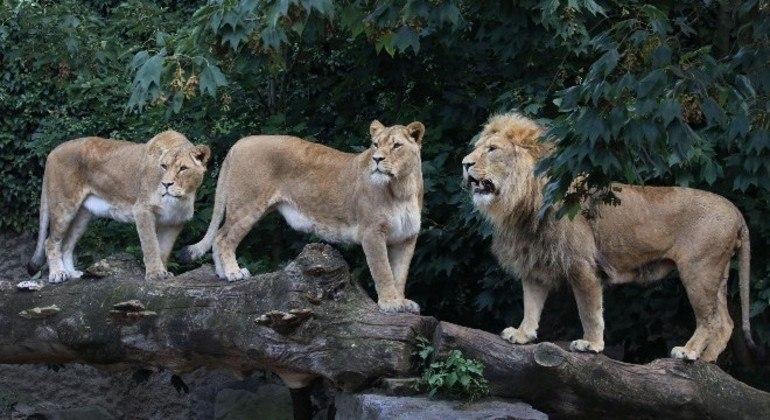 Animais serão transportados para um zoológico na França