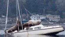 Insólito: leões-marinhos sobem em cima de barco e o afundam