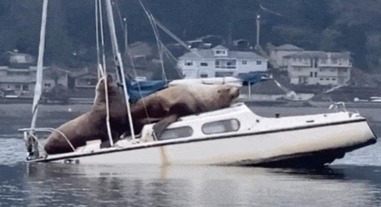 O barco não aguentou e afundou pouco depois
