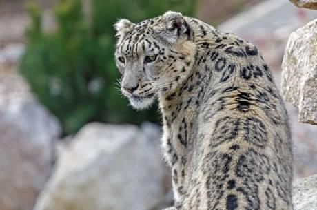 Resultado de imagem para Criança é morta por leopardo no Parque Nacional Kruger, na África do Sul