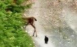 Kelly também contou ter visto os animais junto dias depois da primeira apariçãoLeia mais!Fazendeiro encontra cabra de estimação sendo devorada por píton