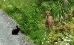 Segundo o tabloide Daily Mail, as imagens impressionantes foram feitas em uma trilha localizada no distrito deCowichan Valley, no Canadá