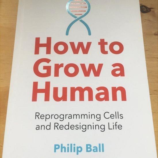 Em seu livro, Ball narra a aventura científica e pessoal de ver seu minicérebro crescer