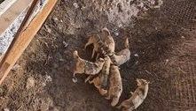 Lobos devoram cão doméstico após dono deixá-lo cair por acidente