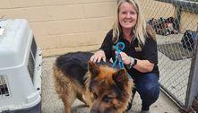 Mais de 150 cães resgatados do Afeganistão chegam ao Reino Unido