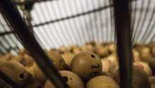 Câmara aprova criação de loterias para financiar Saúde e Turismo