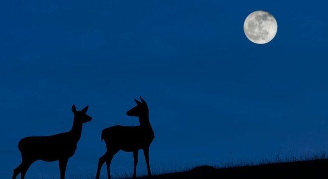 A 'Lua Azul' poderá ser vista na noite de 31 de outubro quando o céu estiver limpo