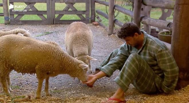 Lucas alimentou as ovelhas com um pouco de ração e as acariciou