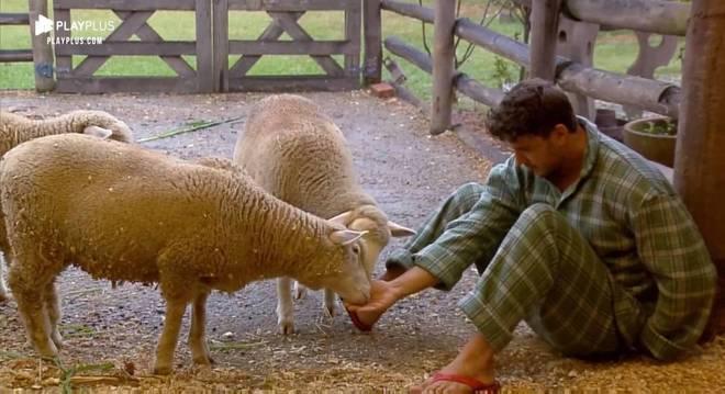 Lucas acordou mais cedo e foi direto alimentar as ovelhas com comida na mão