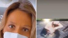 Luisa Mell denuncia homem por maus-tratos a cachorrinho