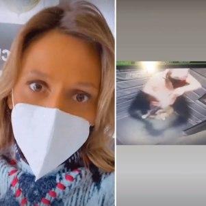 Luisa Mell apura nova denúncia
