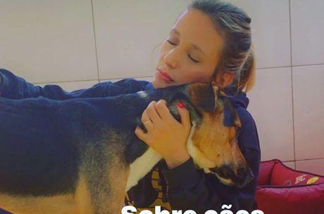 Ativista lamentou que cães sejam devolvidos