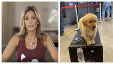 Luisa Mell critica cia aérea após morte de cachorro em voo