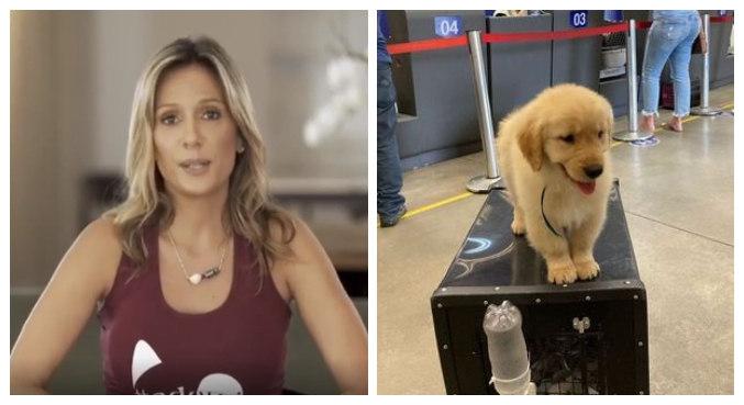 Luisa Mell repudiou criadores que mandaram o animal no bagageiro sem acompanhamento