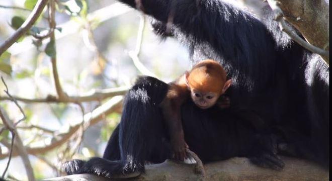 Filhote ficará com a pelagem preta quando for adulto