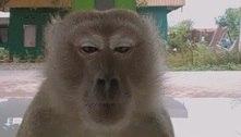 TikTok: macaco apavora irmãs, invade vídeo, tira selfie e foge