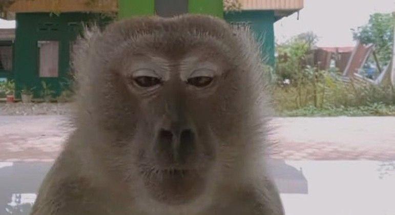 A tranquilidade no rosto do primata que foi responsável pelo sucesso absoluto de um vídeo