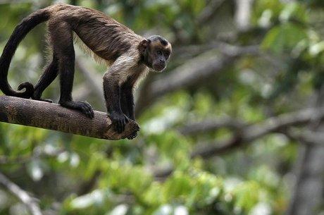 Declínio de vertebrados - mamíferos, peixes, aves, répteis e anfíbios - é uma das preocupações levantadas pelo relatório