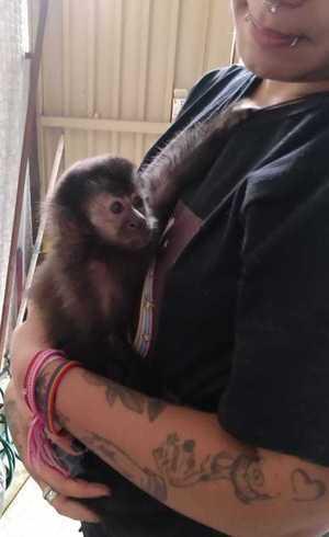Macaco-prego foi apreendido em SP