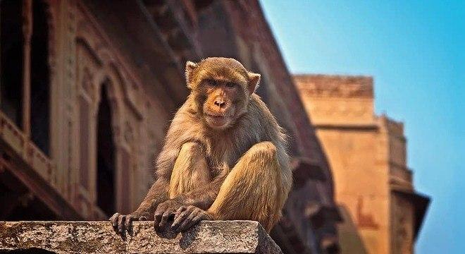 Moradores pedem há anos para que a prefeitura retire os macacos da cidade