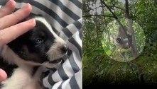 Macaco sequestra cãozinho e o mantém refém por três dias