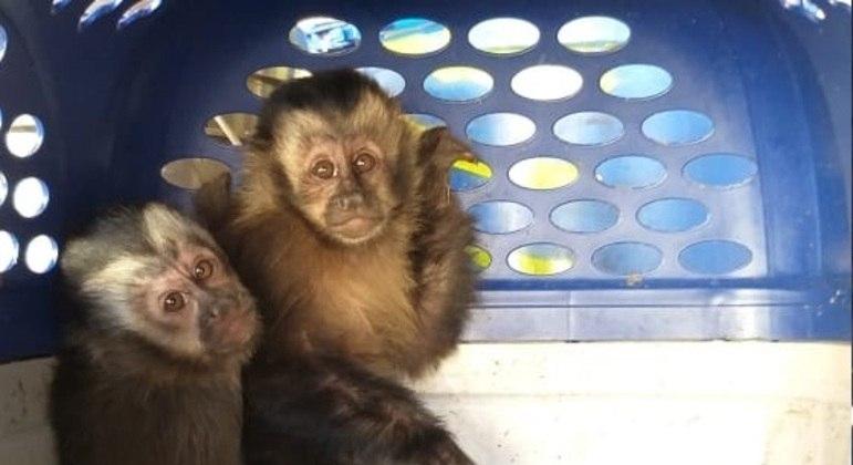 Animais silvestres foram comprados por R$ 4 mil na internet