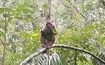 Apesar de um tanto sem explicação, o comportamento pode dizer algo sobre macacosVEJA MAIS:Pescador encontra mensagem em garrafa enviada há 21 anos