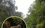 A filmagem foi feita porCheyenne Sosebee, 28 anos, que estava no pequeno caiaque junto com a família