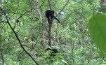 Ou autores concluíram que 'a predação tem sido uma forte força seletiva, que impulsiona a sociabilidade entre os primatas'. O que pode fazer a diferença entre a vida e a morte em um momento de criseEnquanto isso, em uma vila indiana, moradores se fantasiaram de urso para enfrentar cerca de 2 mil macacos. Entenda a seguir!