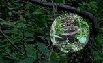 Membros mais jovens do grupo se divertiam entre as árvores, quando cruzaram com a serpente de aproximadamente 2,5 m de comprimentoVeja também:Brasileiro se torna 'Orc' humano com tatuagens e presas de R$ 3 mil