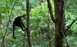 Segundo o blog IFLScience, o resgate surpreendente foi flagrado em 2019, por um grupo de antropólogos que acompanhava os primatas em uma área de conservação de Guanacaste, na Costa Rica