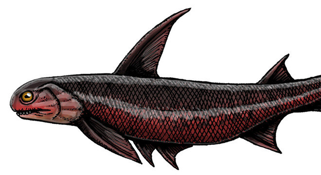 Machaeracanthus sp, um pequeno peixe, viveu há 400 milhões de anos
