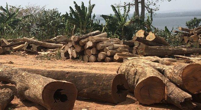 Madeira do lago Volta poderia impulsionar economia de Gana, mas também afetar ganha-pão de centenas de milhares de pescadores