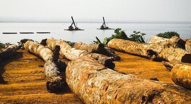 Madeira do lago torna-se fossilizada depois de passar décadas submersa