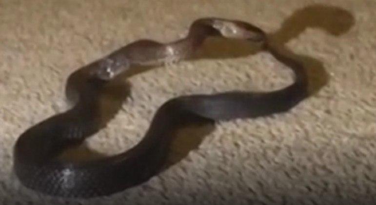 Uma mãe suspeitou de um cadarço no quarto da filha e descobriu uma cobra venenosa