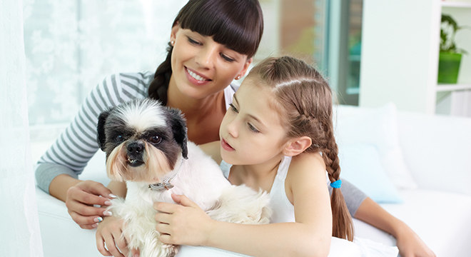 Os animais fazem parte da família