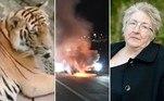 Mãe descobre que caixão do filho estava vazio por 42 anos.Turista cutuca 'parte sensível' de tigre sedado.Carro de luxo pega fogo em rodovia e freios não funcionam a 240 km/h.A seguir, os conteúdos mais lidos doHORA 7na última semana!