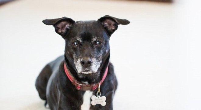 A cachorrinha Maggie morreu após tratamento com a ração especial