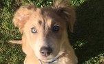Maggie, uma das cachorras resgatadas