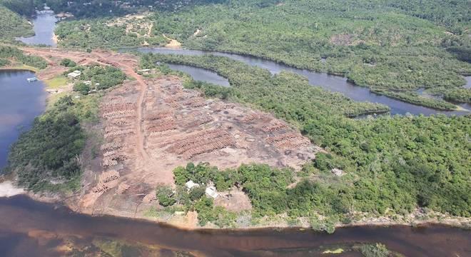 Maior apreensão de madeira nativa da história do Brasil