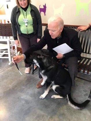 Biden entrou em contato com o abrigo e adotou Major. O cachorro agora será o primeiro cão adotado a morar na Casa Branca