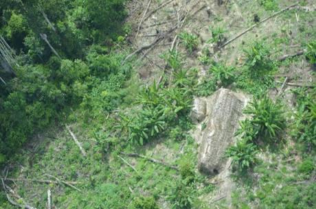 Maloca do grupo isolado korubo fotografada por um drone da Funai; estima-se que grupo tenha de 30 a 40 membros
