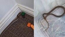 Mamãe heroica remove serpente escondida em brinquedo do filho