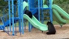 Desce pro play! Mamãe ursa ensina filhote a usar o escorregador