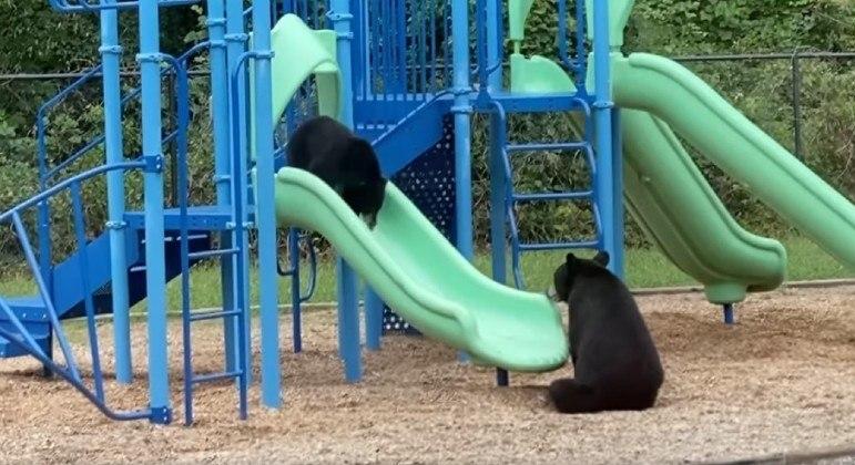 Mamãe ursa se diverte com filhote em parquinho de escola nos EUA