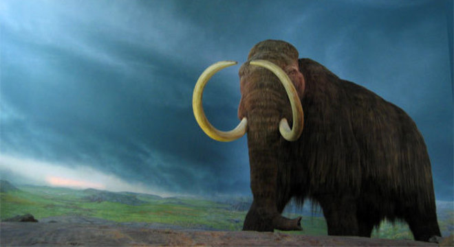 Mamutes-lanoso entraram em extinção a apenas 4 mil anos atrás
